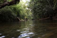 bamboo-forest-koorg2